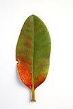 листья изолированные осенью Стоковые Изображения RF