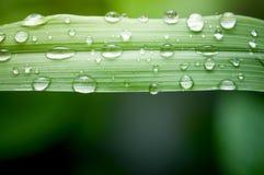листья изумительных капек капельки диаманта зеленые вышли как вода верхушкы взглядов Стоковая Фотография RF