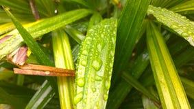 листья изумительных капек капельки диаманта зеленые вышли как вода верхушкы взглядов Стоковое Изображение RF