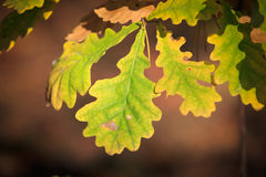 листья листьев предпосылки осени цветастые сухие Стоковые Фотографии RF