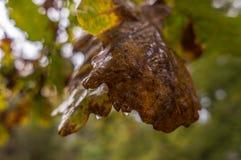 листья листьев предпосылки осени цветастые сухие стоковая фотография