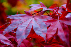 листья листьев предпосылки осени цветастые сухие Стоковое фото RF
