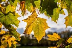 листья листьев предпосылки осени цветастые сухие стоковые фото