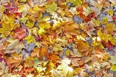 листья листьев предпосылки осени цветастые сухие Стоковое Фото