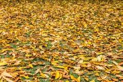 листья листьев предпосылки осени цветастые сухие стоковое изображение rf