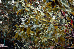 листья листьев предпосылки осени цветастые сухие стоковая фотография rf