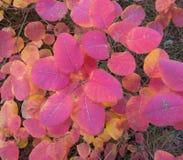 листья листьев рамки абстрактной предпосылки осени цветастые Стоковое фото RF