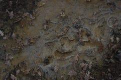 листья и лед грязи Стоковые Изображения