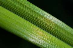 листья крупного плана зеленые Стоковые Изображения RF