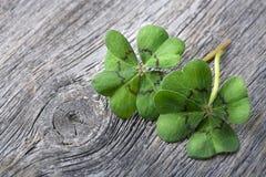 листья клевера 4 Стоковые Изображения RF