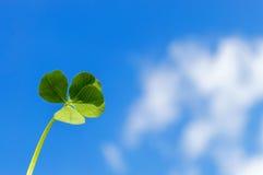 листья клевера 4 Стоковые Фотографии RF