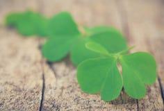 листья клевера Стоковые Фотографии RF