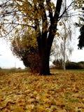 листья на дереве Стоковое Изображение