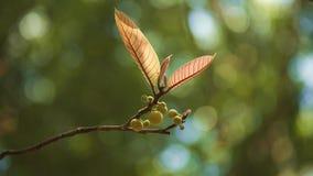 листья новые Стоковые Изображения