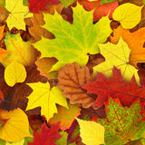 листья осени делают по образцу безшовное Стоковые Фото