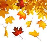 листья осени падая Стоковое фото RF