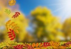 листья осени падая Стоковая Фотография RF
