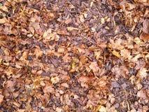 листья осени упаденные предпосылкой Стоковая Фотография RF