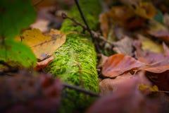 листья осени цветастые Стоковые Фотографии RF