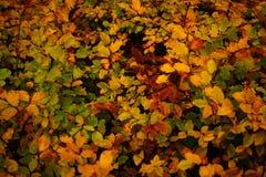 листья осени цветастые Стоковое Фото