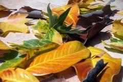 листья осени яркие Стоковое Изображение RF