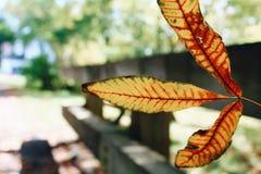 листья одиночные Стоковое Изображение