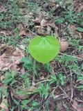 листья одиночные Стоковые Изображения RF