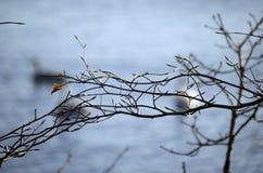 листья одно Стоковое Фото
