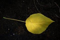 листья одно Стоковая Фотография RF