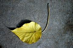 листья одно Стоковые Фото