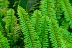 листья папоротника зеленые изолированные белые Стоковые Изображения RF