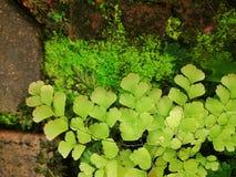 листья папоротника зеленые изолированные белые Стоковое Изображение RF
