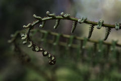 листья папоротника новые Стоковая Фотография RF