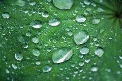 листья падений росы зеленые Placer диамантов Стоковая Фотография RF