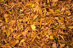 листья падения предпосылки осени искусства цифровые стоковые фотографии rf