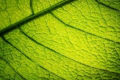 листья предпосылки зеленые Стоковая Фотография RF