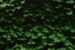 листья предпосылки зеленые Стоковые Фото