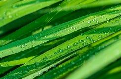 листья предпосылки красивейшие зеленые Стоковые Изображения