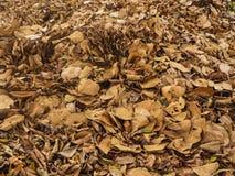 листья предпосылки сухие Стоковые Фотографии RF
