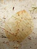 листья просвечивающие Стоковые Изображения RF