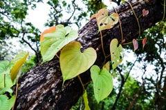 листья сердца сформировали Стоковая Фотография RF