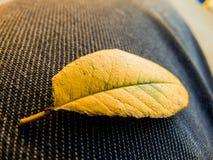 листья сиротливые Стоковое Изображение RF