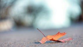 листья сиротливые Стоковое Изображение