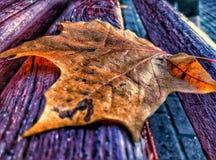 листья сиротливые Стоковая Фотография