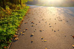 листья упаденные осенью Стоковое Фото
