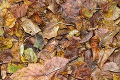 листья упаденные осенью стоковое изображение