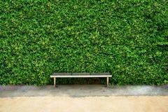 листья фона зеленые Стоковое Изображение