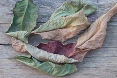 листья экземпляра предпосылки осени над космосом деревянным Стоковые Фото
