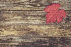 листья ярких цветов ветви осени освещенные контржурным светом предпосылкой золотистые выходят клену желтый цвет вала солнца помер Стоковое Изображение