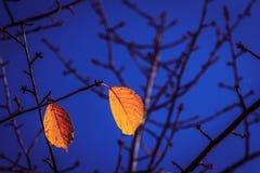 листья 2 Стоковые Изображения